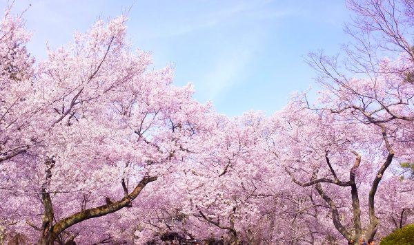 長野市で外壁塗装を行うなら季節はいつ